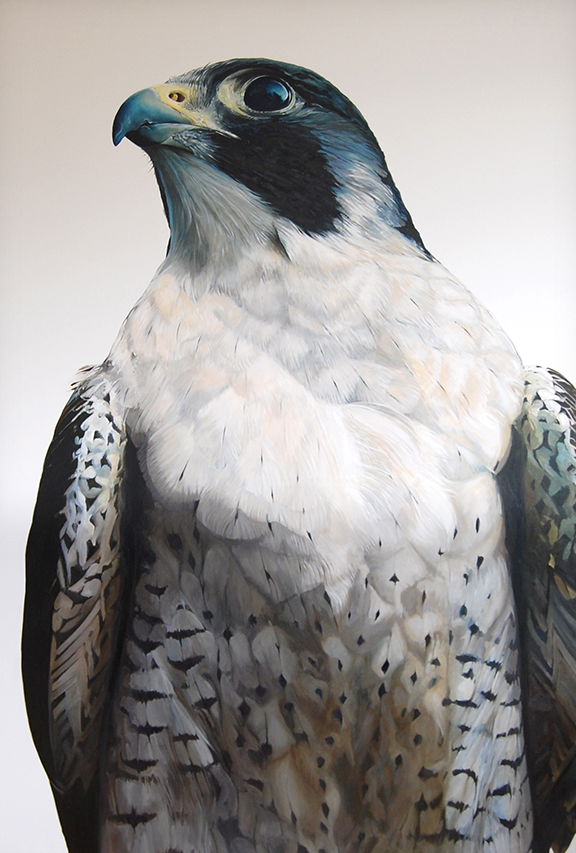 The Peregrine 6ft x 4ft Oil on Linen