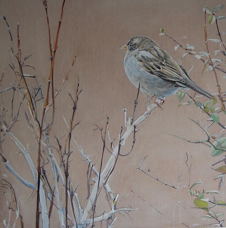 House Sparrow Oil on Linen 85 cm Sq